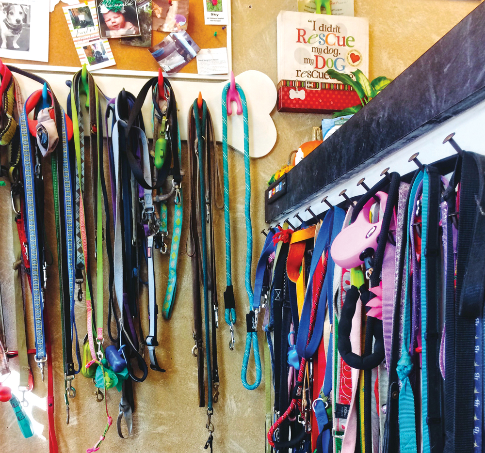 Leashes at Downtown Doggie Center