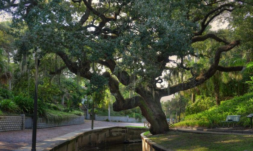 Charles Oak, Roser Park. Photo credit: Beth Reynolds/Morean Arts Center