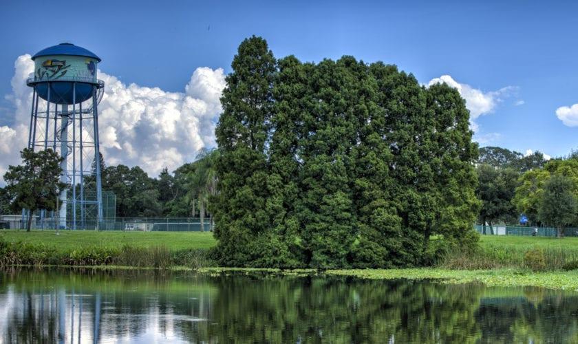 Bald Cypresses, Crescent Lake. Photo credit: Tim Fritz/Morean Arts Center