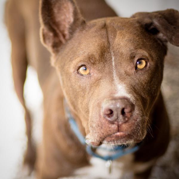Pet Pal Animal Shelter - Duke