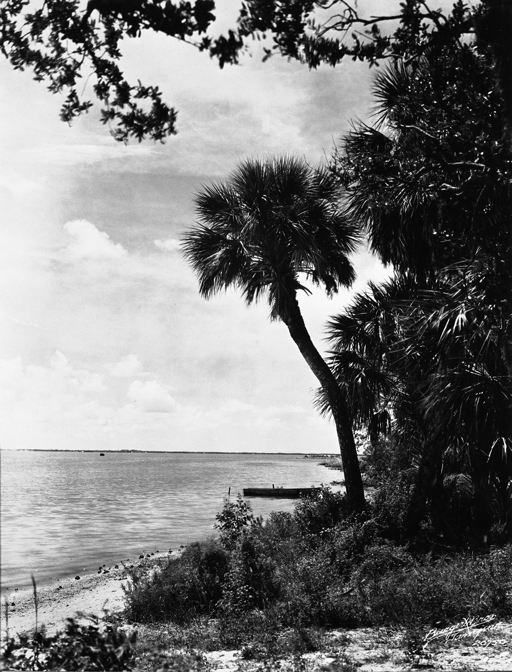 View from Weedon Island. 19--?. Black & white photonegative, 5 x 4 in. State Archives of Florida, Florida Memory.