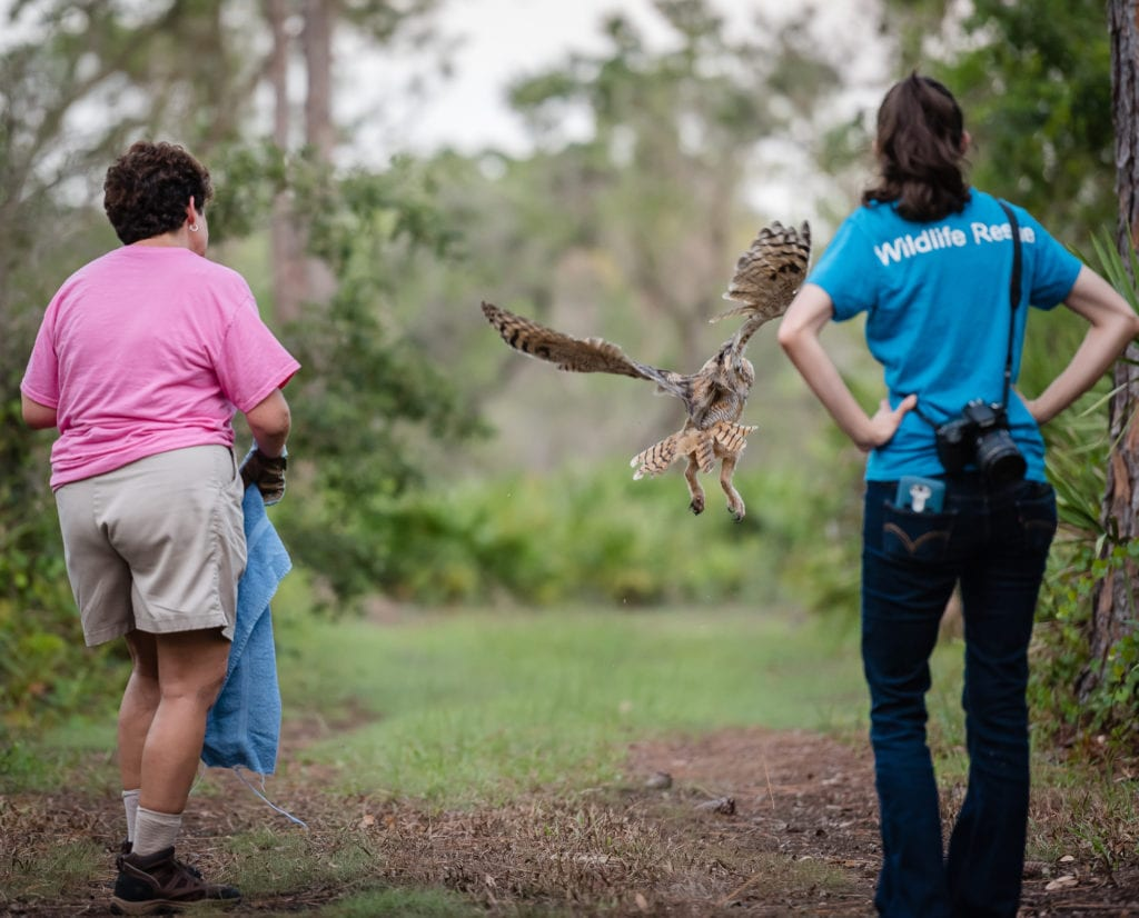 Kris Porter and Wildlife Rescue releasing Great Horned Owl fledgling. Photo by Douglas DeFelice/Prime 360 Photography.